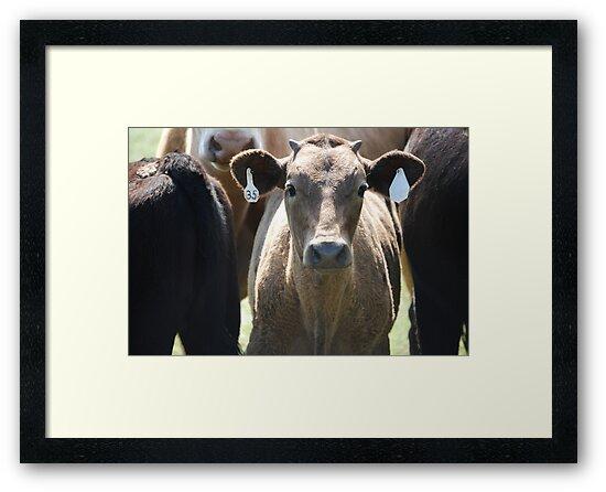 Inquisitive Cow by Suz Garten
