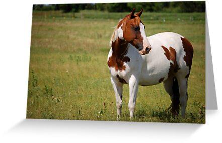 Paint Horse in Repose by Suz Garten