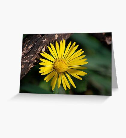 Yellow Compass Wildflower Greeting Card