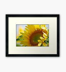 Kansas Sunflower Framed Print