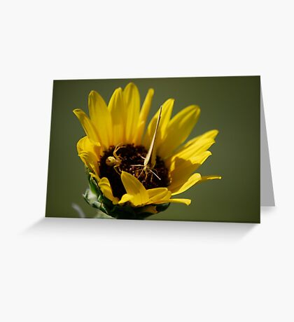 Butterfly vs Spider on Sunflower Greeting Card