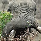 Hungry Bull Elephant by loz788