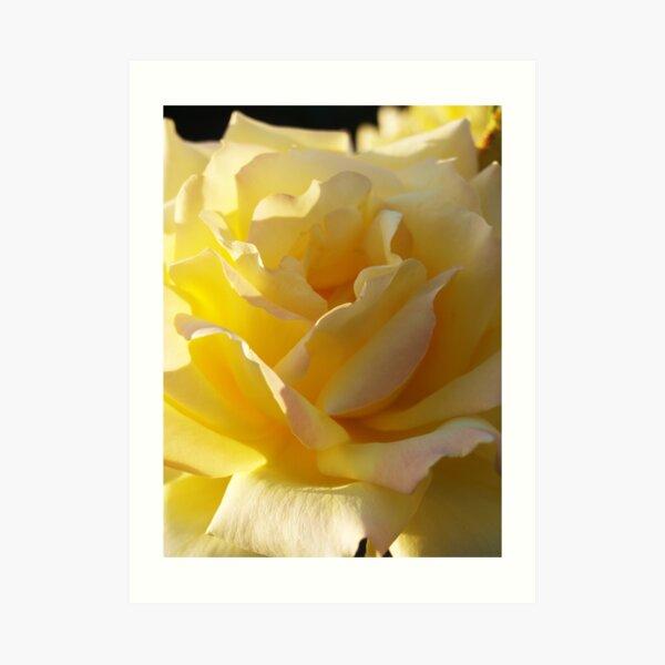 Soft Sunny Petals Art Print