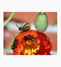 Grass Hoppers Photographic Print
