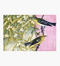 Vintage Bird Hard Journal Cover Photographic Print