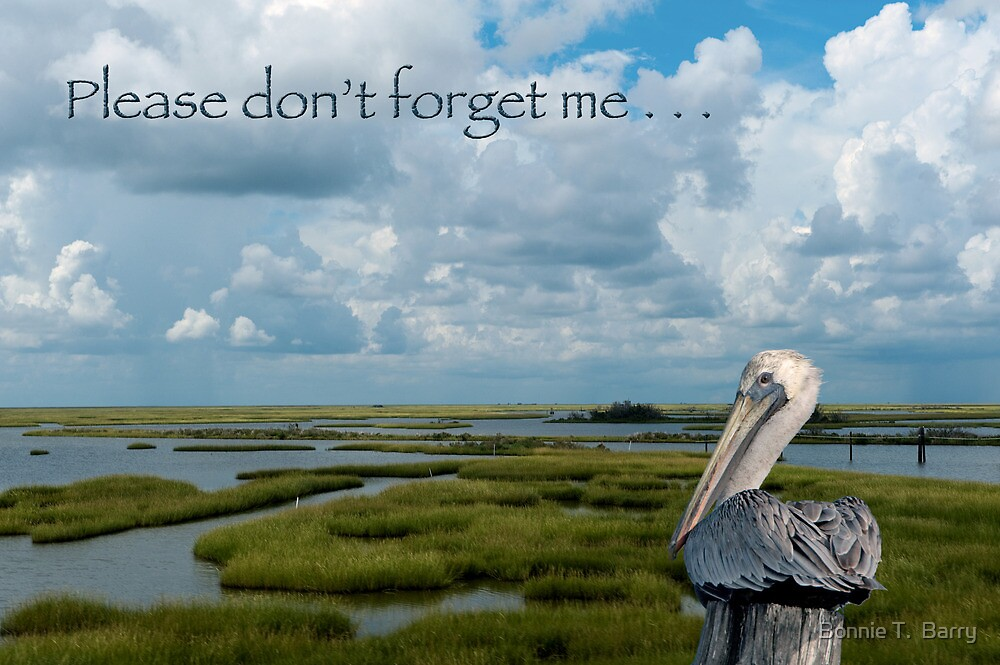 Please don't forget me by Bonnie T.  Barry