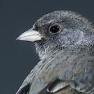 Dark Eyed Junco  by EthanQuin