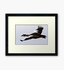 Flight Of The Egyptian Goose Framed Print