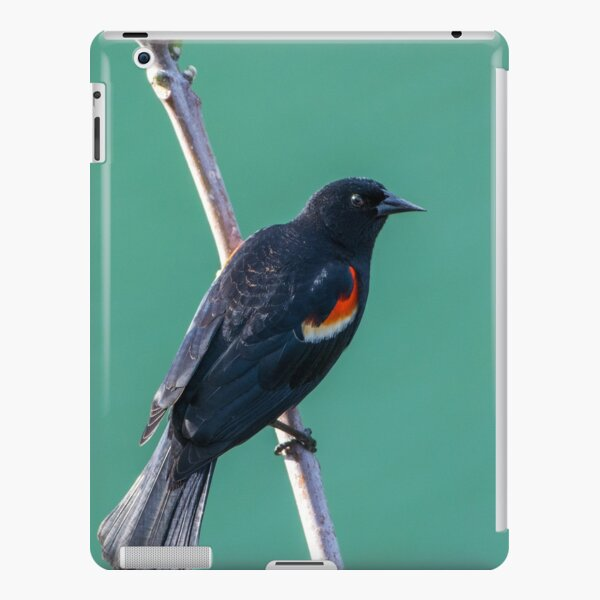 Red Winged Black Bird iPad Snap Case