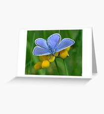 Common Blue on Yellow Greeting Card