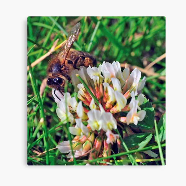 Bee On Flower 0027 Canvas Print