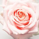 Macro Photography of Pale-pink Rose by thed4rkestrose