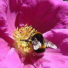 bee on flower by purpleminx