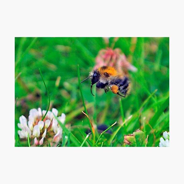 Flying Bee 0029 Photographic Print