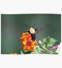 Fluttering around Poster