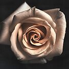 White Rose Flower Wallpaper by thed4rkestrose