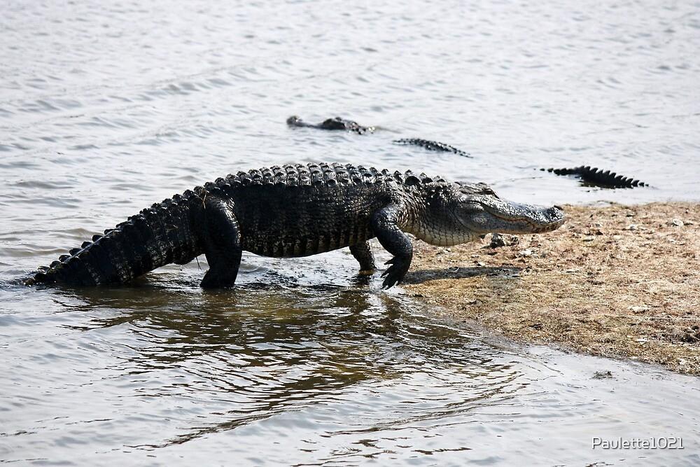 Alligator at Huntington Beach State Park by Paulette1021