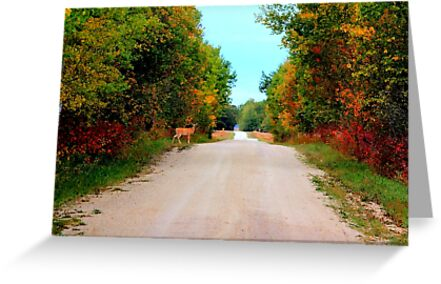 Autumnal Morning by Larry Trupp