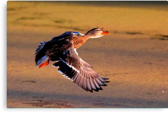 Take off by Larry Trupp