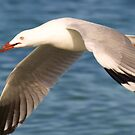 Gull by Jon Staniland