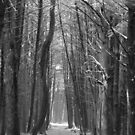 woodland walkway by vigor