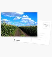 Cornfield Lane Postcards