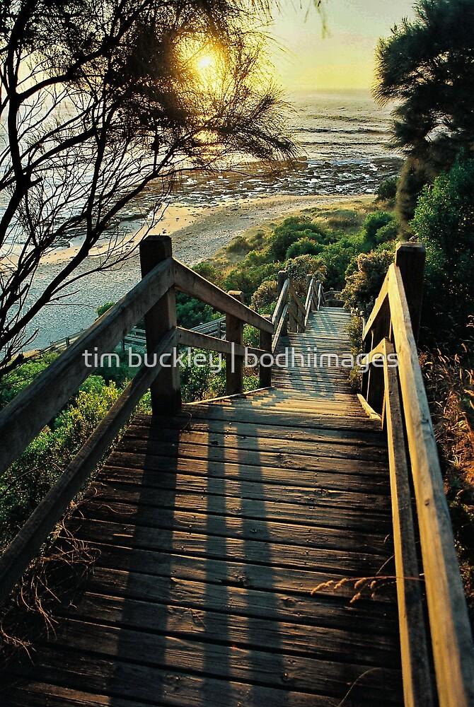 beach steps. shack bay bunurong marine park by tim buckley | bodhiimages