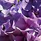 MULTI-HEAD  FLOWERS