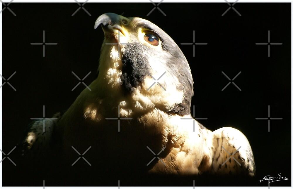 """Peregrine Falcon I"" by Skye Ryan-Evans"