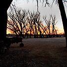 Nebraska Sunrise #2 by Cari Jo Blain