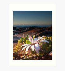 Sea Side Daisy Art Print