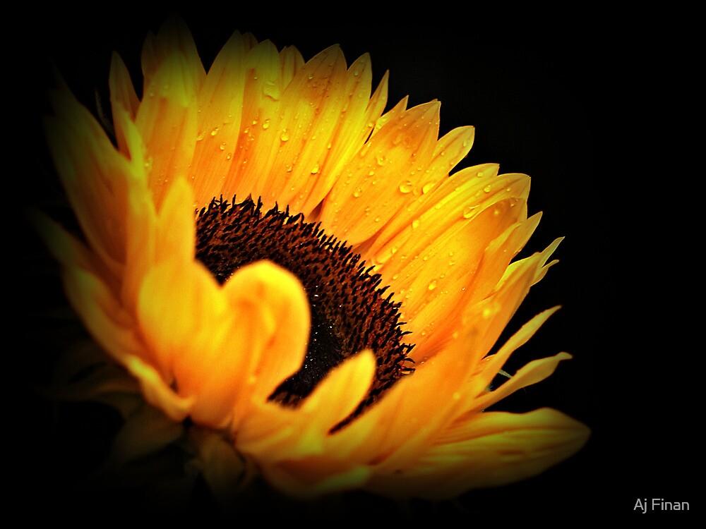 Yellow Sunflower. by Aj Finan