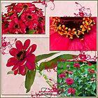 Zinnias Four Photo Collage  by Sandra Foster