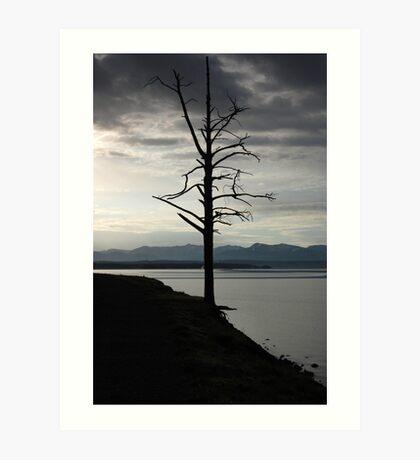 Tree on Yellowstone Lake Art Print