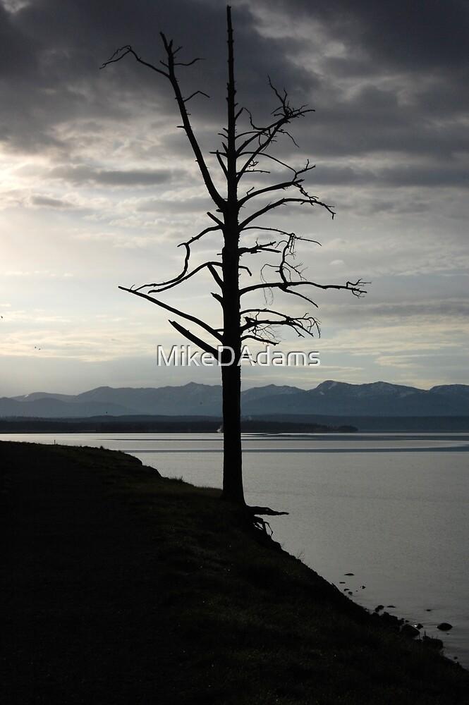 Tree on Yellowstone Lake by MikeDAdams