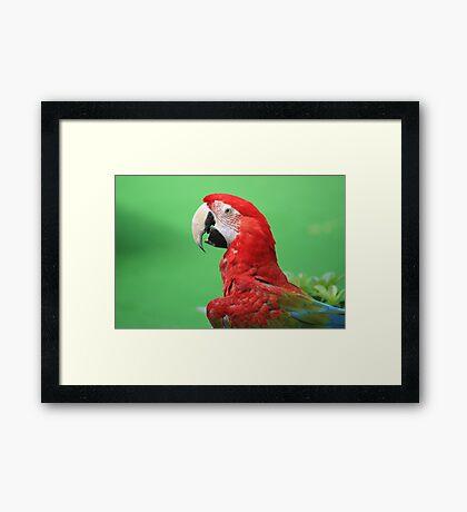 Majestic Macaw Framed Print