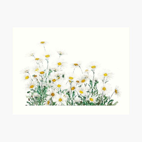 white margaret daisy horizontal watercolor painting Art Print