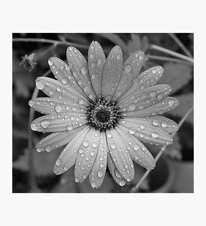 Rain Drops b/w Photographic Print
