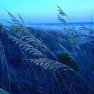 Sea Oats Grass by Jennifer Ingram