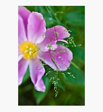 Peony and Straw of Grass Photographic Print