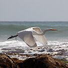 White in Flight One by Tom Deters