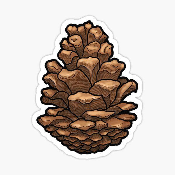 Pine Cone Illustration Sticker