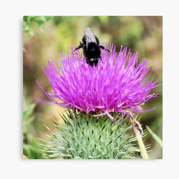 Bee On Flower 0048 Canvas Print