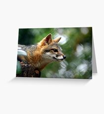 contemplate Greeting Card