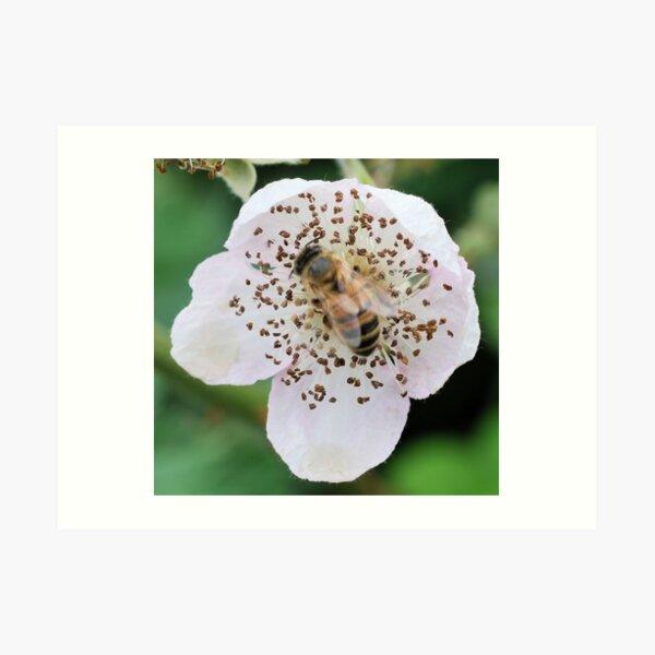 Bee On Flower 0054 Art Print