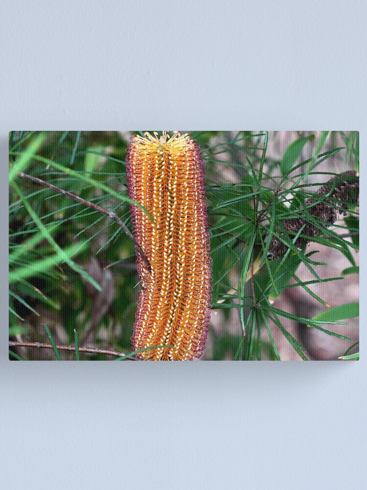Alternate view of Banksia spinulosa Canvas Print