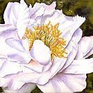 White Peonie by Anne Sainz