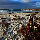 dusk. redbill beach. bicheno, tasmania. by tim buckley | bodhiimages