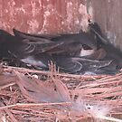 Nestled All Snug in Their Box by teresa731