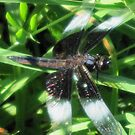 Blue Dragonfly Resting On the Grass by teresa731